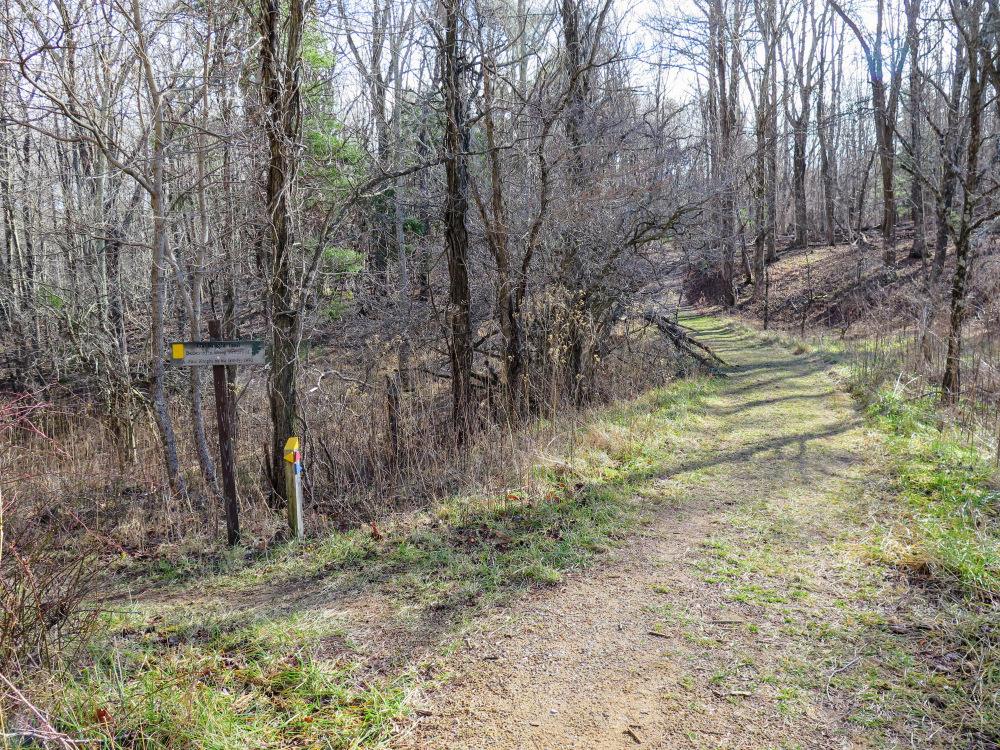 bent mountain Roanoke county police have filed trespassing charges against two women sitting in trees along the mountain valley pipeline right-of-way theresa ellen terry, 61, nick-named red and her daughter theresa minor.